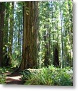 California Redwood Forest Trees Art Prints Metal Print