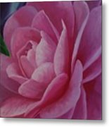 California Rose Metal Print