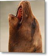California Sea Lion Calling Out Metal Print