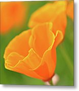 California Spring Poppy Macro Close Up Metal Print