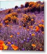 California State Flower Study Metal Print