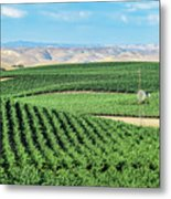 California Vineyards 1 Metal Print