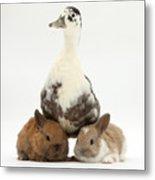 Call Duck And Baby Netherland Metal Print