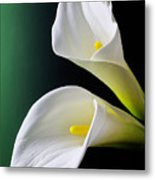Calla Lily Green Black Metal Print