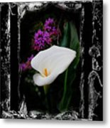 Calla Lily Splash Metal Print