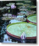Calm Reflections Metal Print