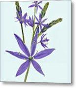 Camas, The Flowers Metal Print