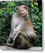 Cambodia Monkeys 2 Metal Print
