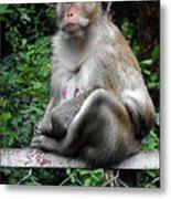 Cambodia Monkeys 3 Metal Print