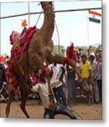 Camel Dance Pushkar Metal Print
