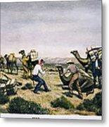 Camel Express, 1857 Metal Print