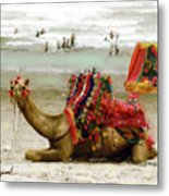 Camel For Ride  Metal Print