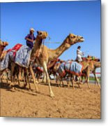 Camel Racing In Dubai Metal Print