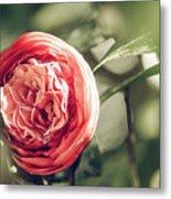 Camellia 3 Metal Print