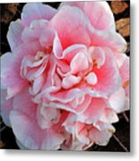 Camellia Flower Metal Print