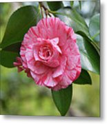 Camellia Hybrid Metal Print