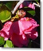 Camellia Light And Bud Metal Print