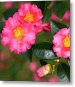 Camellia Pink Metal Print