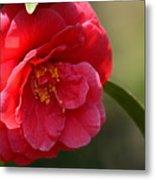 Camellia Rosette Metal Print