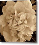 Camellia Sepia Metal Print