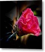 Camellia Silhouette  Metal Print