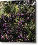 Camellia Tree Metal Print