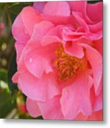 Camellias Of The South Metal Print