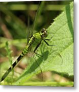 Cameo Green Dragonfly Metal Print
