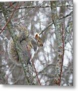 Camera Shy Grey Squirrel Metal Print