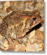 Camouflage Toad Metal Print