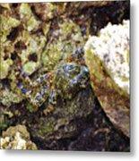 Camouflaged Crab Metal Print