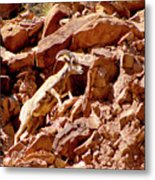 Camouflaged  Sun-drenched  Climb Metal Print
