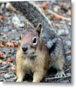 Campground Chipmunk Metal Print