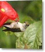Can I Help You Hummingbird  Metal Print