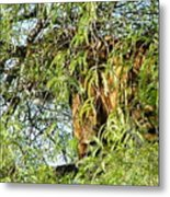 Can You See Me........ Metal Print by Nick Gustafson