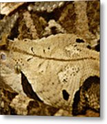 Can you see me now. Metal Print