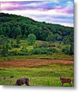 Canaan Valley Evening Metal Print