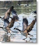 Canada Geese 1390-011618-1 Metal Print