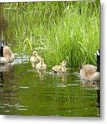 Canada Goose Family 2 Metal Print