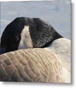 Canada Goose Head Metal Print
