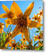 Canada Lily Metal Print