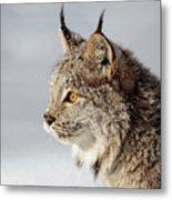 Canada Lynx Up Close Metal Print
