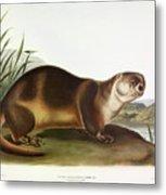 Canada Otter Metal Print