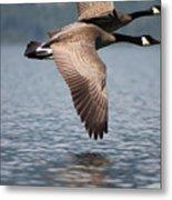 Canada's Goose Metal Print