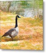 Canadian Geese 6 Metal Print