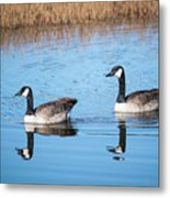 Canadian Geese Couple Metal Print