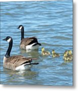 Canadian Geese Family Vacation Metal Print