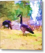 Canadian Geese In The Park 3 Metal Print