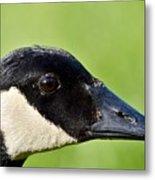 Canadian Goose Portrait Metal Print