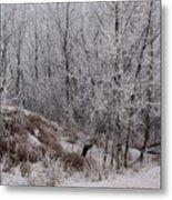 Canadian Ice Fog  Metal Print
